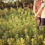 Junges Paar verlobt sich auf einer sonnigen Wiese